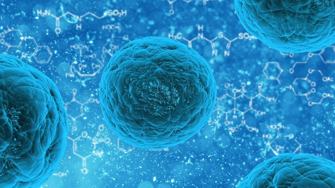 What are Stem Cells and What is Their Role in Regenerative Medicine?