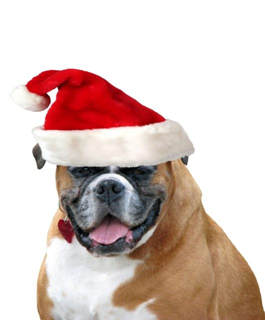 christmas-dog-santa-hat-1380574690wta