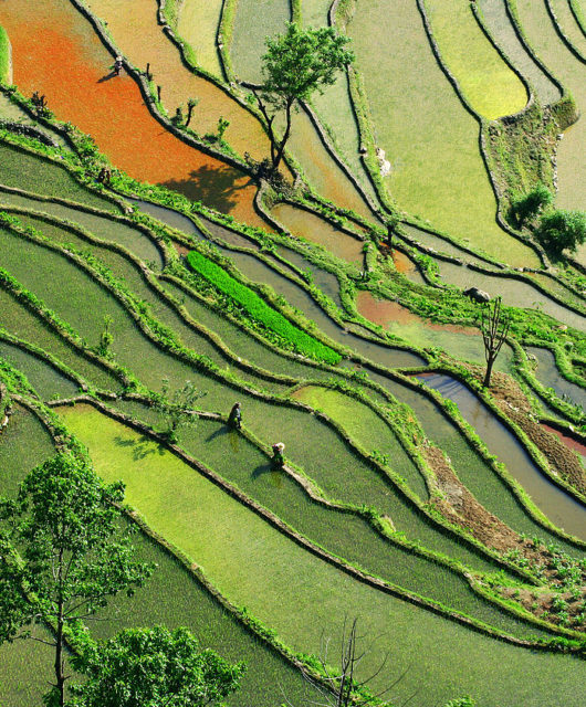 1280px-Subsistent_Farming_Southern_China