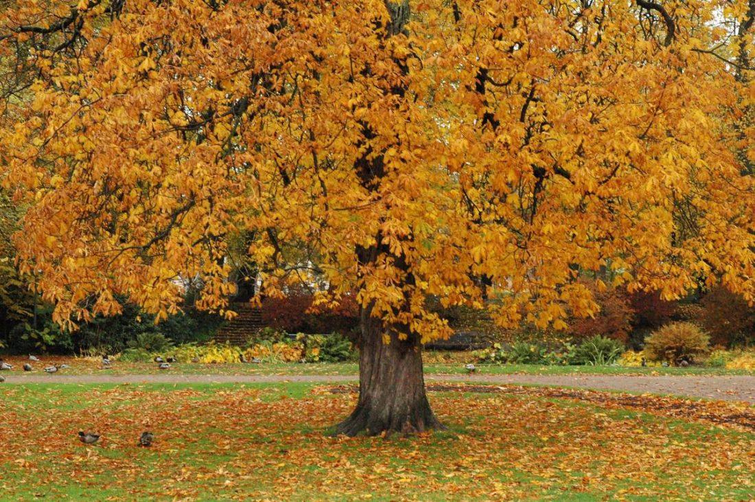 Autumn_Sweden