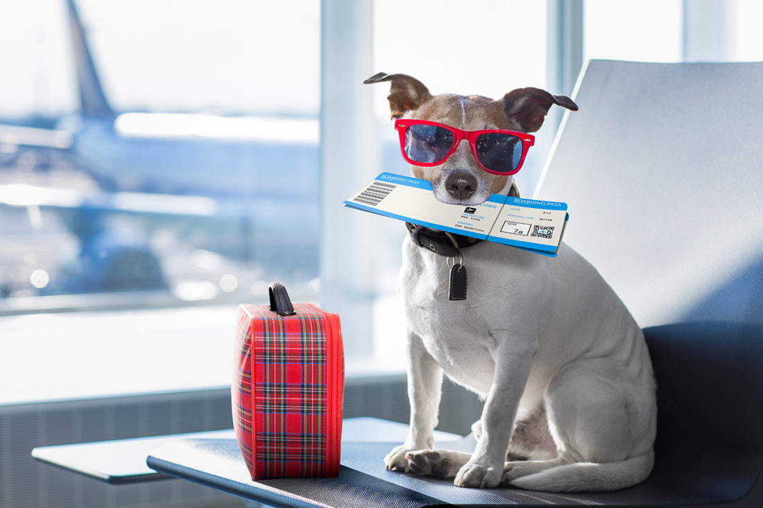 Pets on Planes: What You Need to Know